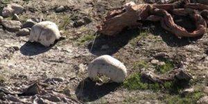 Şengal'de Ezidi toplu mezar bulundu