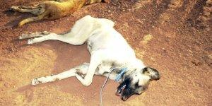 Hacıbektaşta Vahşet:  Sokak hayvanları öldürülüp yakılıyor