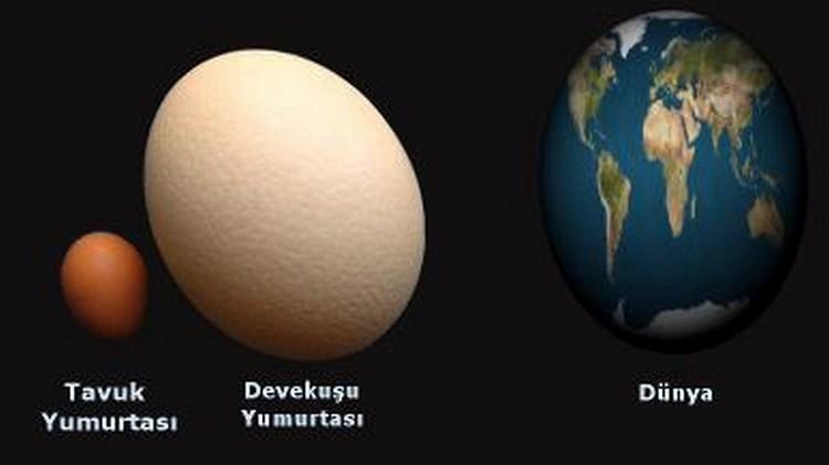dunya-yumurta.jpg